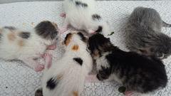 piccoli gattini appena nati, due giorni di vita