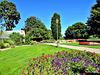 Hamilton Gardens in Flower.