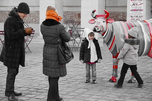 Rencontre avec une vache à rayures