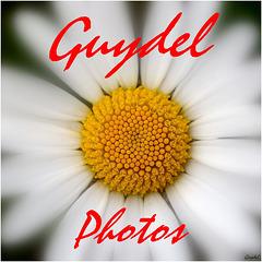 Guydel.fr est devenu ...