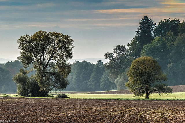Fall Knocking - Herbstmorgen (150°)