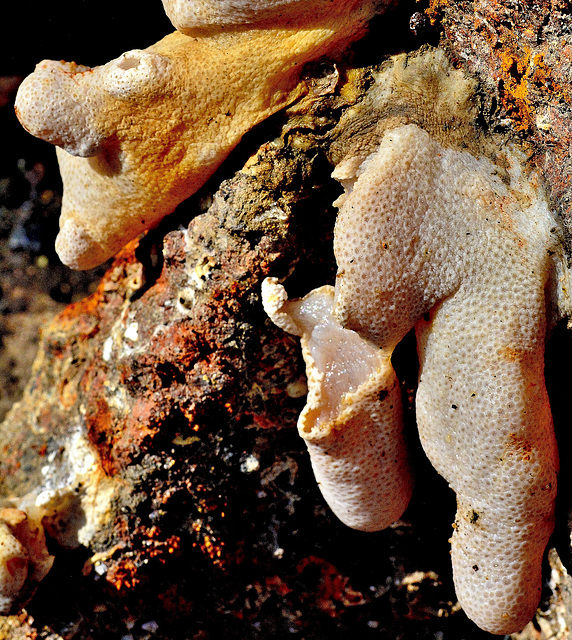 Detail on the Anchor. Coral or Sponge?