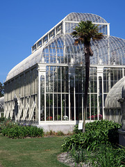 IMG 5519-001-Great Palm House 2