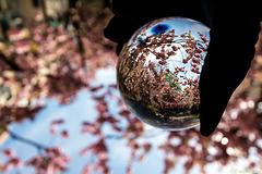 Die Kirschblüte eingefangen (PiP)