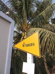 Coocotier fléché en jaune / Arrow coconut tree in yellow