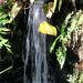 IMG 5529-001-Tropical Water Feature