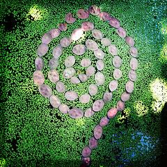 Lunaria spiral