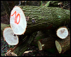 Das Ende eines Baumlebens als Wirtschaftsgut