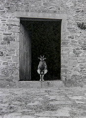 princess she-goat apparition