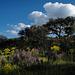 Penedos, Trees, Spring