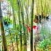Im Bambus - Regenwald... ©UdoSm