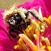 The 50 Images-Project... Le Pollen 1/50