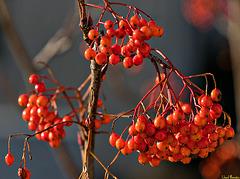 Baum vorm Fenster: Alles bereit fürs Neue Jahr!