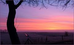 Pink Morning....