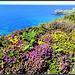 A splash of Cornish summer colour!