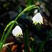Frühlingsanfang - Beginning of spring - PiP