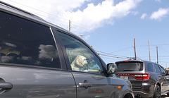 Toutou voyageur / Traveler dog