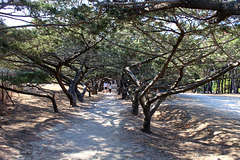 île de Rhodes