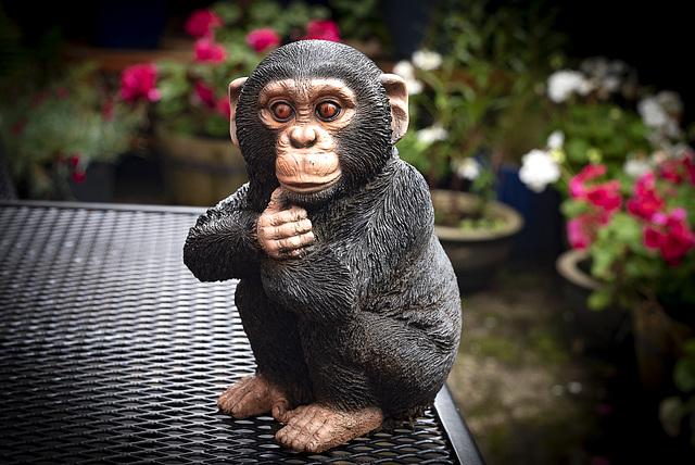 """Cheeky Chimp"""