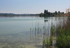 Bodensee bei der Insel Reichenau