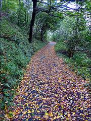 La strada di foglie (437)