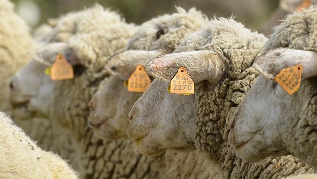 Shepherding, Identity