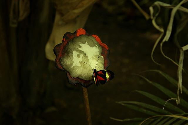Le ferme aux papillons (1)