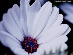 Flower Id please 056 copy