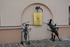 Lietuva, Insects at Kaunas Town Hall Square