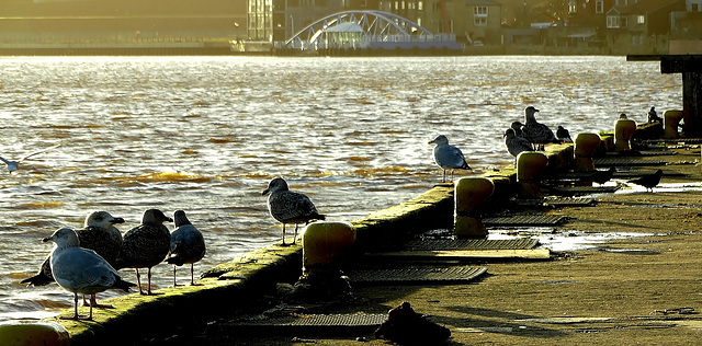 Gulls and Moorings