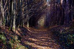 Forêt domaniale de Beynes
