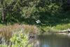 Parc ornithologique du Teich  - Suite et fin - ( 9 notes)
