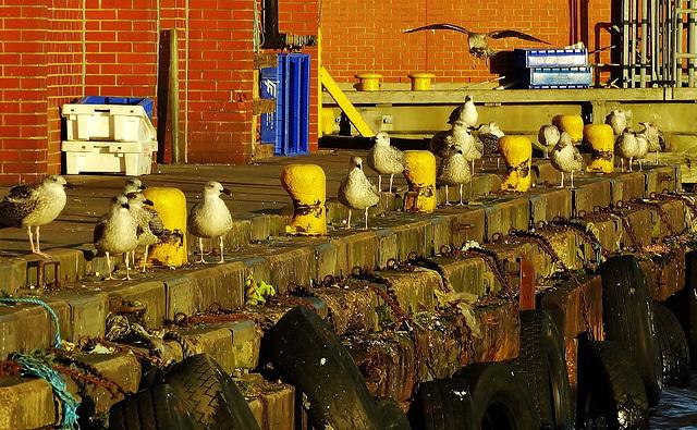 Gulls and Moorings