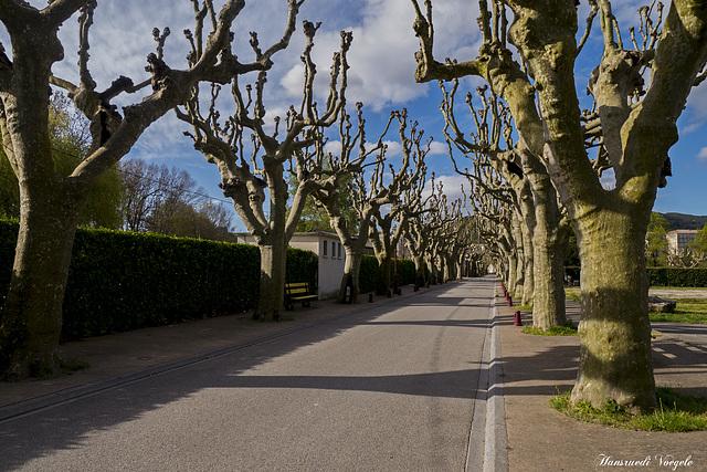 Plantanen Alle von der Rhone zur Stadt Viviers