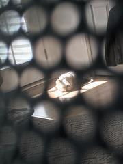 Through a mesh-back chair