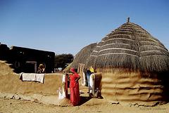 Desert Tar- Rajasthan