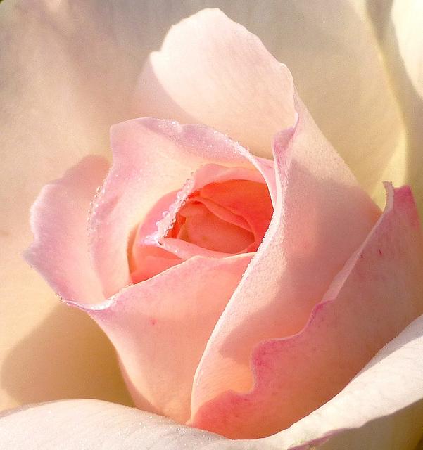 Dans la rosée matinale...