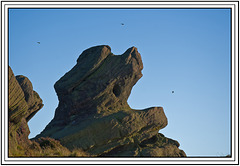 A Pipit-catching rock