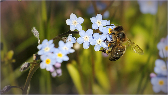 Bee free....