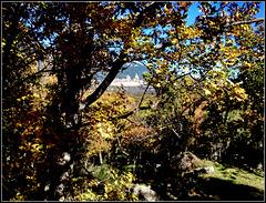 Through the autumnal trees