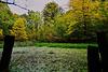 Tief im Steigerwald .... In the deep Forest ...