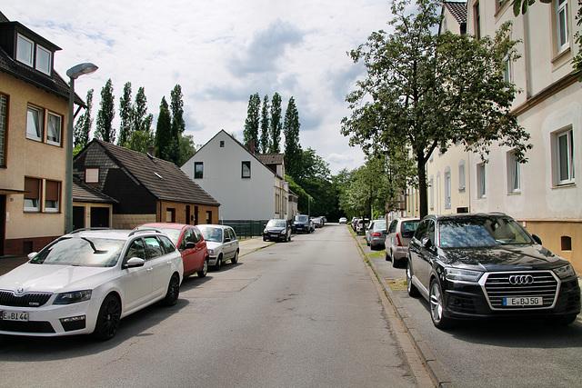 Gerscheder Weiden (Essen-Gerschede) / 9.06.2019