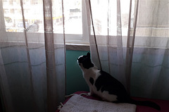Spying the neighbour.