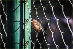 birdy ... ♫ ♪ ♪ ♫