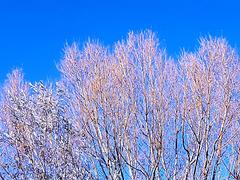 Arbre d'automne sur Ciel Bleu