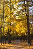 In Puschtscha-Wodyzja im Herbst