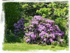 Dans mon jardin [ON EXPLORE]