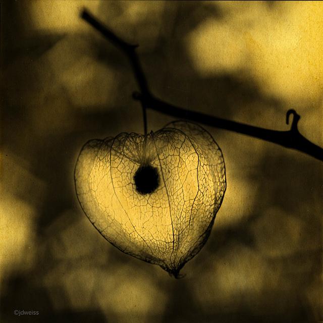 nature's lantern