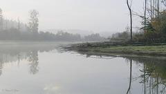 Misty Day 2...
