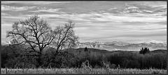 Environs de Crémieu (38) 18 janvier 2015. Les Alpes vues depuis Parmilieu.